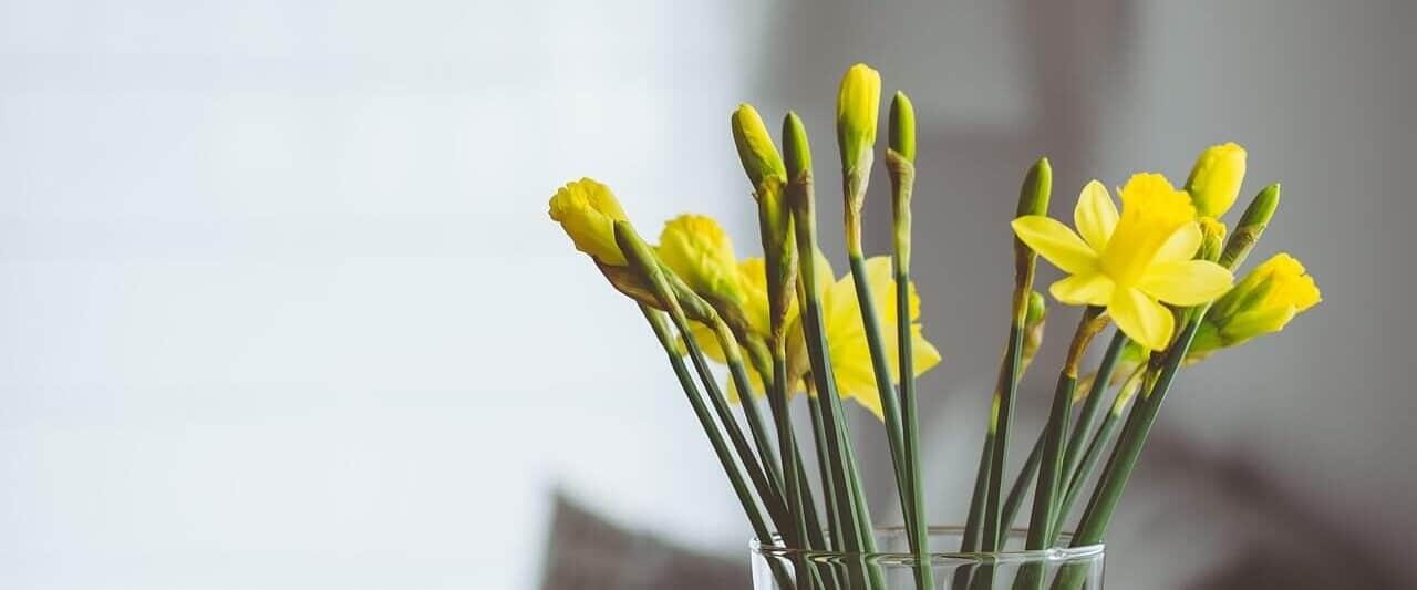 fresh flowers smell