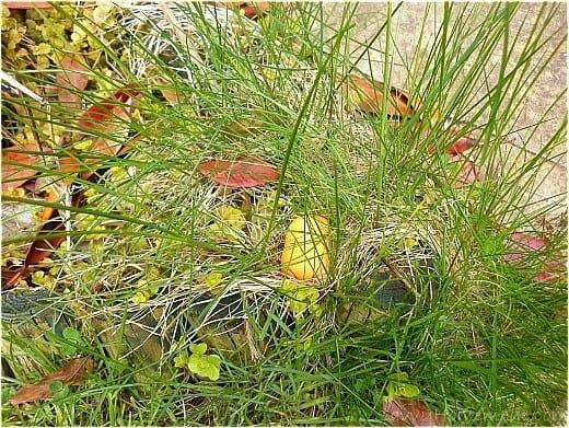 the secret message in grass