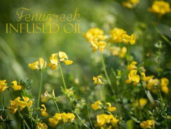 Fenugreek Infused oil
